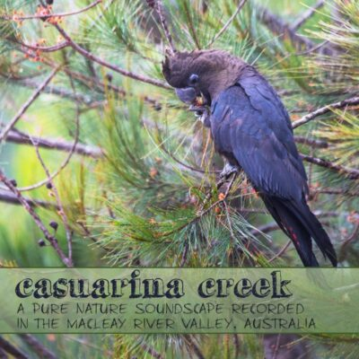 Nature Sounds from the Australian Bush - 'Casuarina Creek' album cover