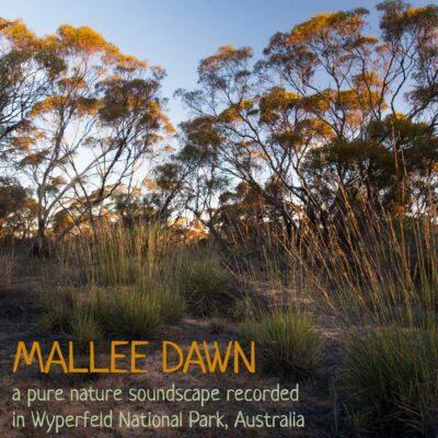 Nature Soundscape MP3 - Mallee Dawn