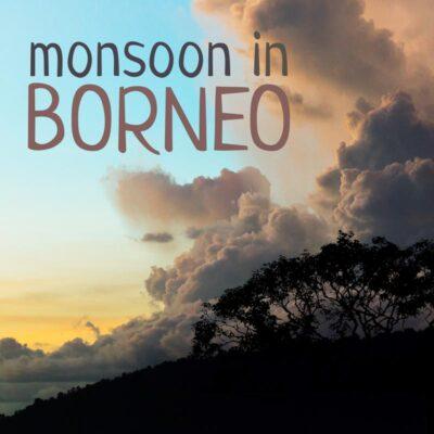 Nature sounds album - 'Monsoon in Borneo' cover