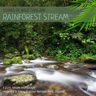 Nature Sounds MP3 from Thailand - 'Rainforest Stream'
