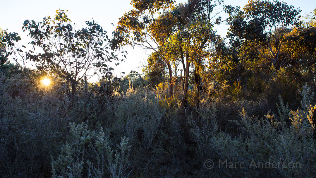 Trip Update: Winter Woodland, Kings Plains National Park, NSW, Australia