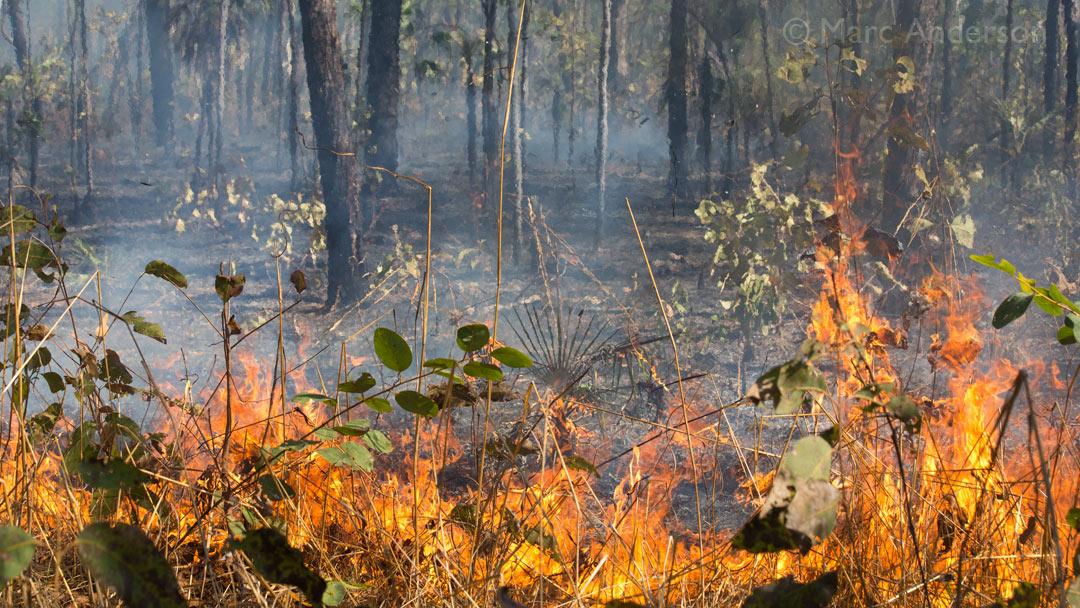 Bushfire in Kakadu