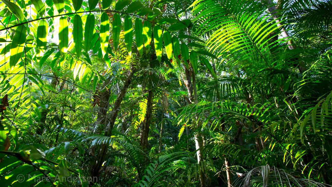 Eubenangee Rainforest, Queensland, Australia