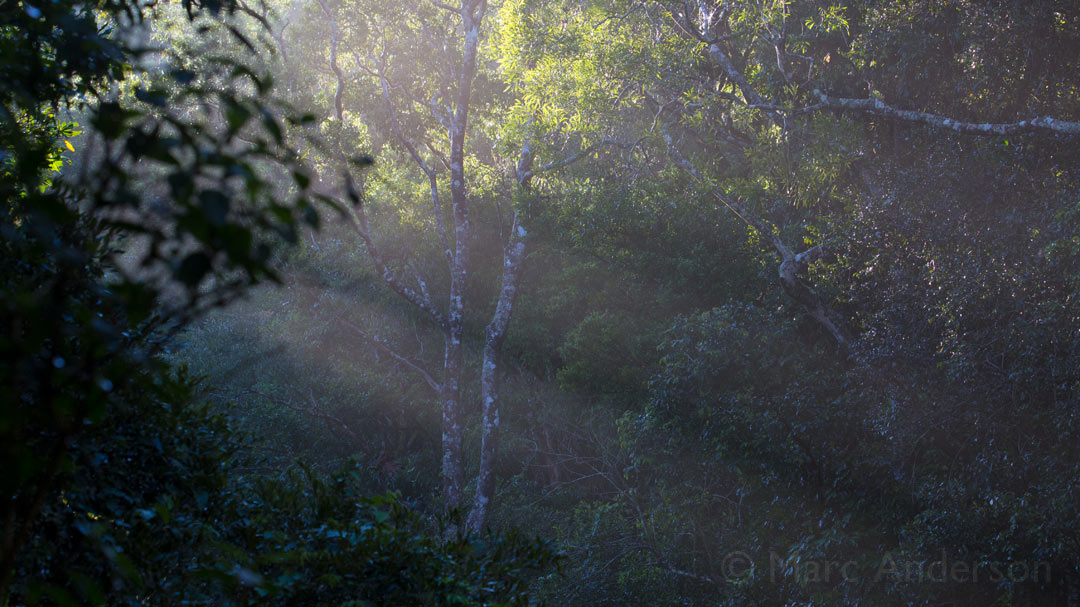 Sounds of the Mt. Lewis Rainforest, Queensland, Australia