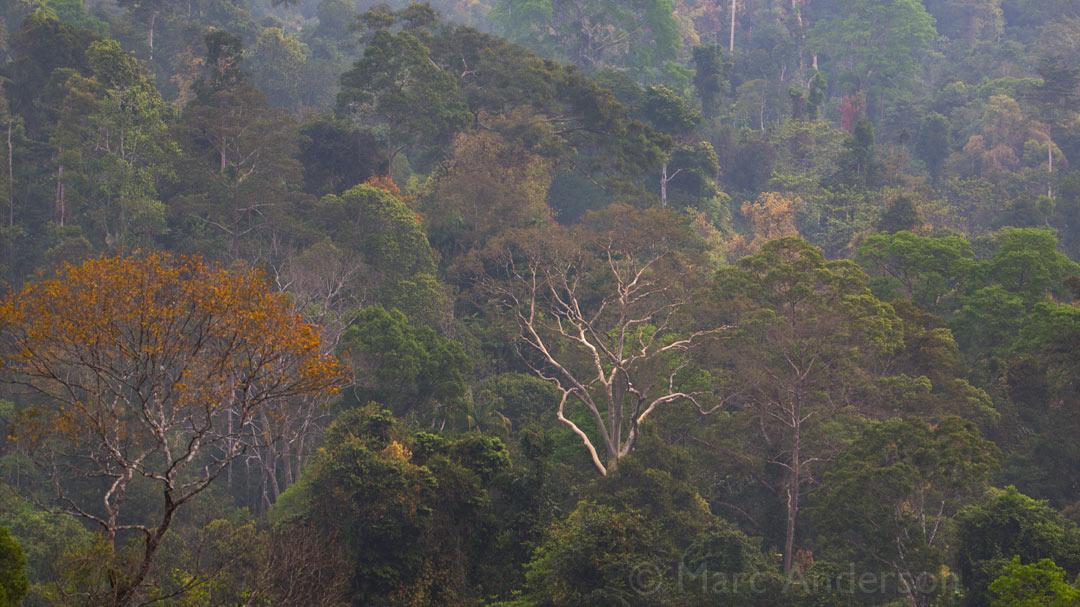 Vanishing Soundscape from Kuala Tahan, Taman Negara, Malaysia