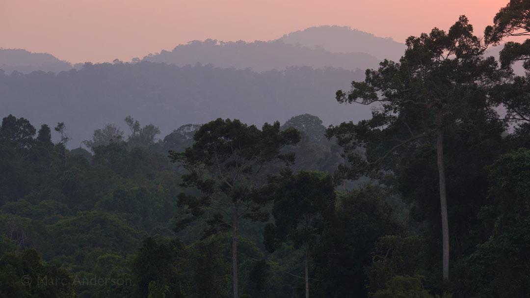 Album Release: Sounds of Wild Thailand I – Thailand's Tropical Rainforest