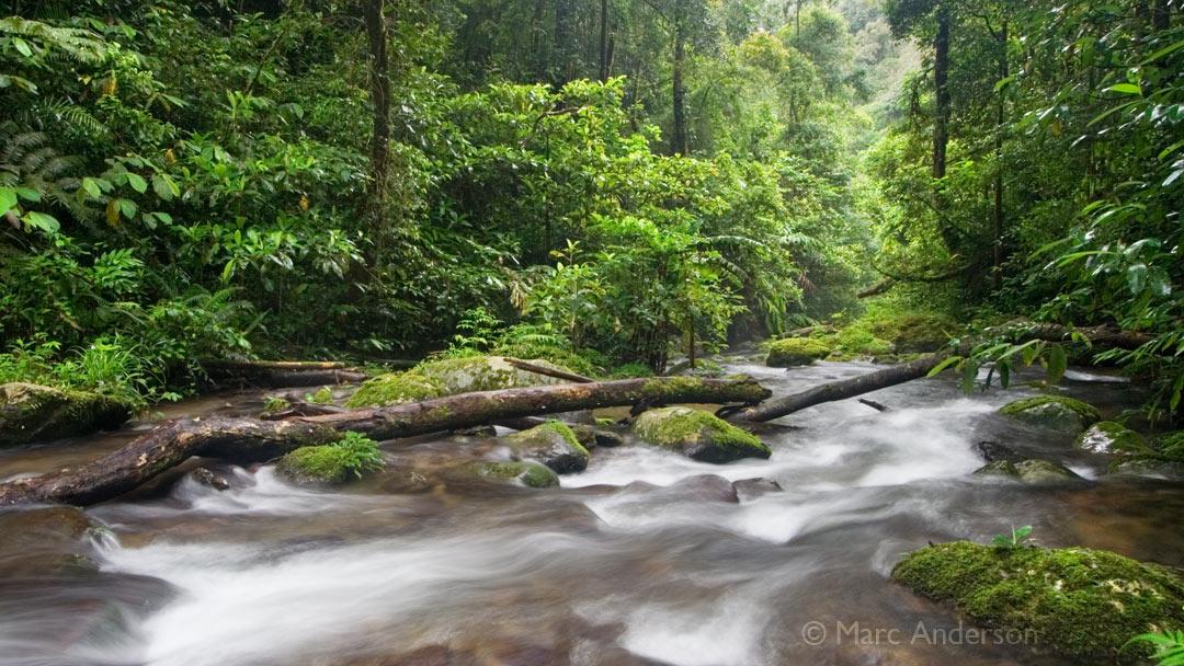 Album Release: Sounds of Wild Thailand V: Rainforest Stream