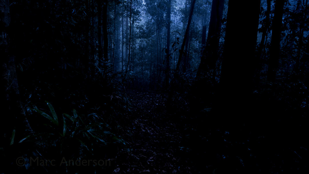 Mystery Night Sound – Ulu Muda, Malaysia