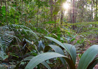 Montane forest habitat at Bukit Fraser