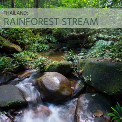 Thailand: Rainforest Stream - Album Cover