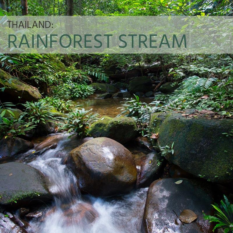 Thailand: Rainforest Stream - Album Cover