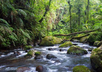 River in montane rainforest