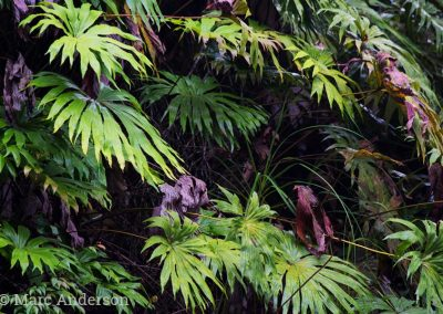 Ferns in the undergrowth