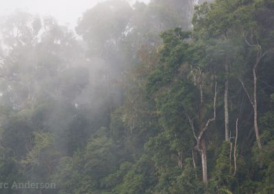 Cloud forest at Fraser's Hill