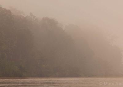 Kinabatangan rainforest at dawn