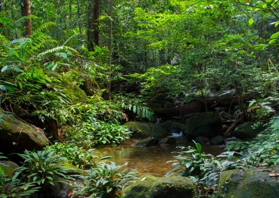 Rainforest in Kubah