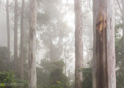Wet eucalypt forest in the Watagans