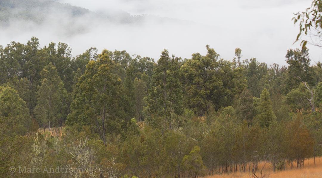 Grassy woodland