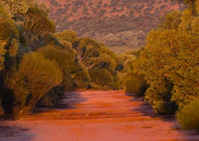 Red sand track in mallee