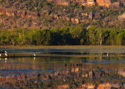 Waterbirds on Anbangbang Billabong