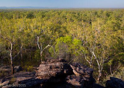 Tropical woodland