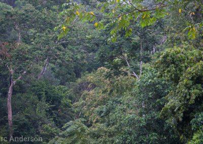 Rainforest in Kaeng Krachan