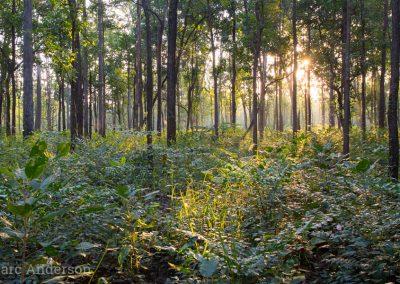 Huai Kha Khaeng forest