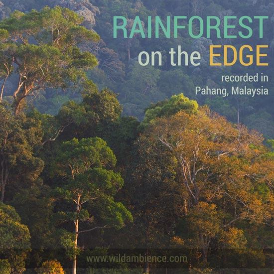 Rainforest on the Edge - Nature Sounds Album Cover