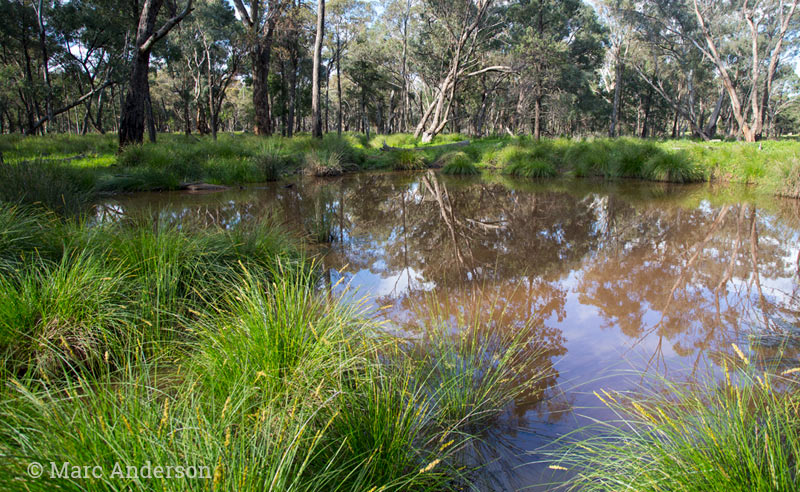 Flooded woodland, Backyamma State Forest, NSW