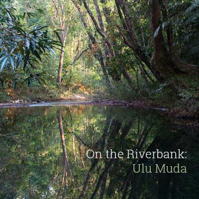 On the Riverbank: Ulu Muda