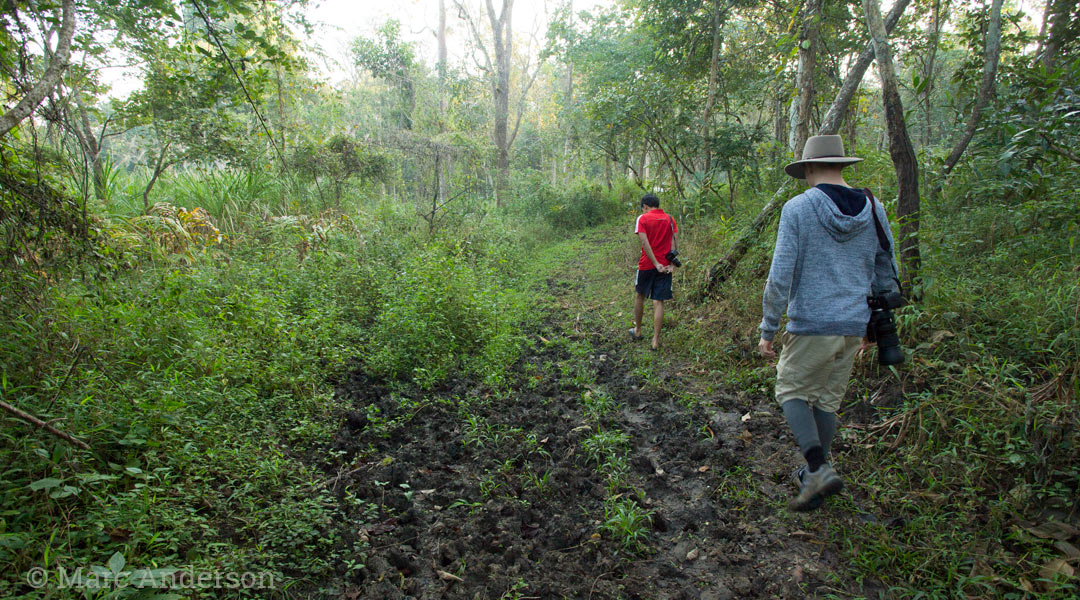 Walking to a salt lick, Thung Yai West Wildlife Sanctuary