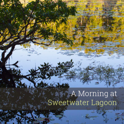 A Morning at Sweetwater Lagoon - Album Cover