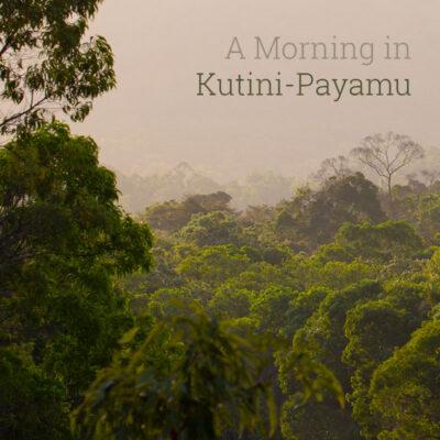 A Morning in Kutini-Payamu