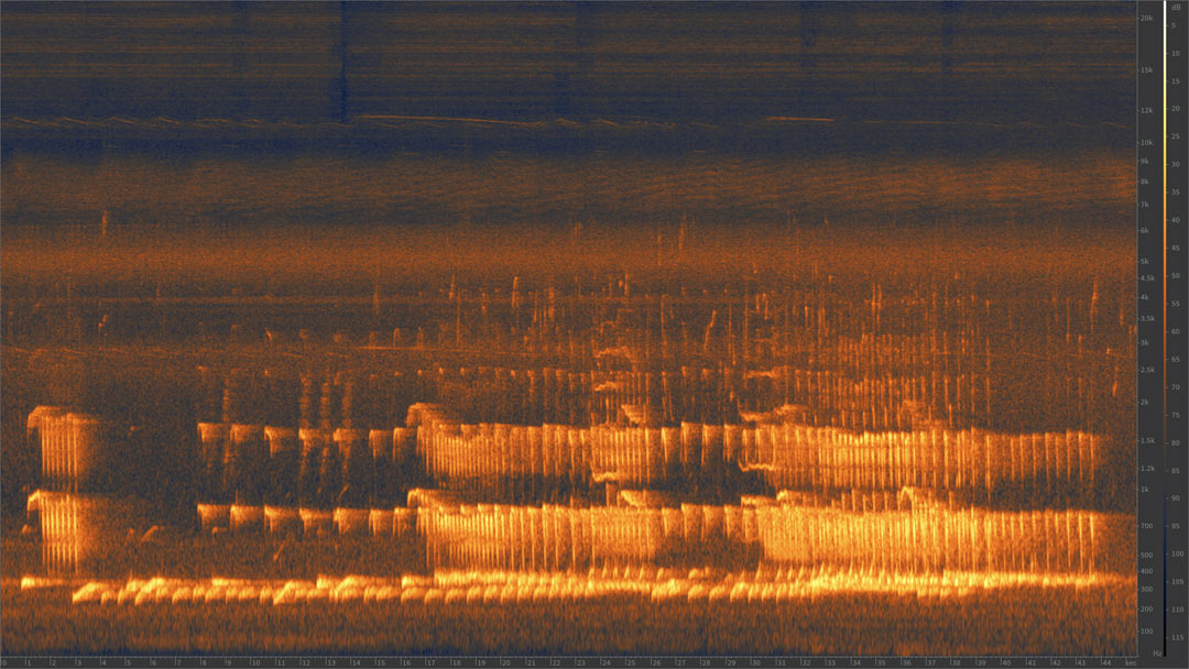 Spectrogram of Siamang (Symphalangus syndactylus) call