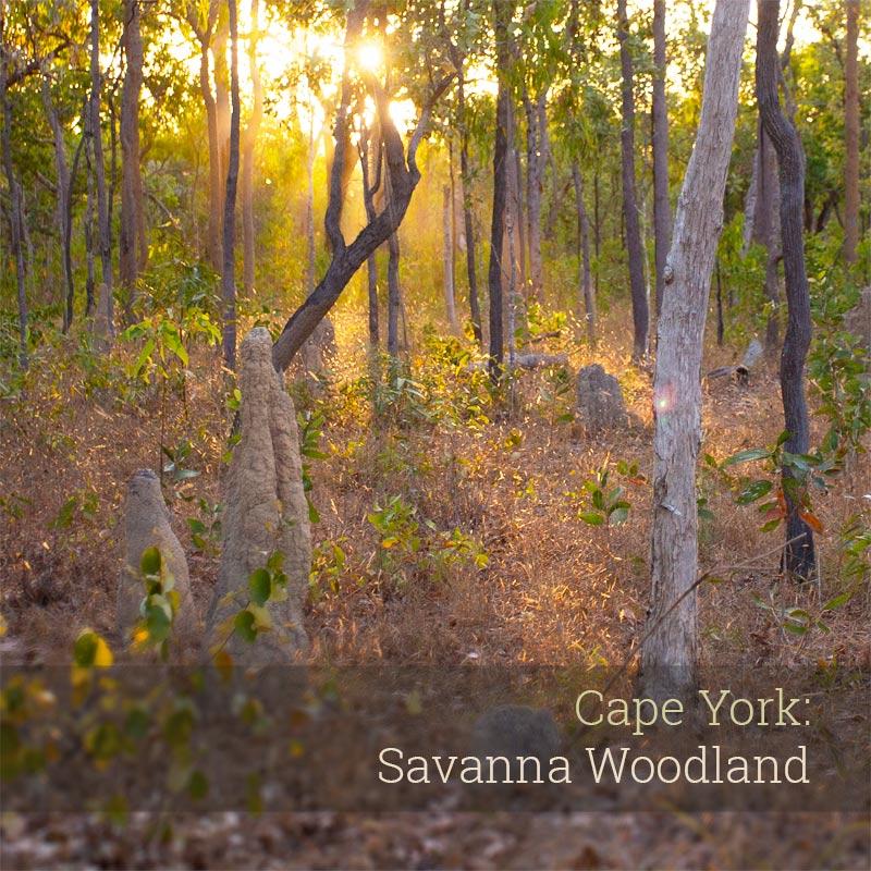 Cape York: Savanna Woodland - Album Cover