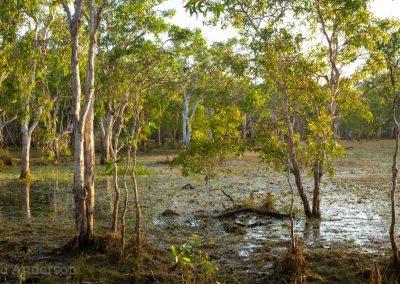 Melaleuca (Paperbark) Swamp