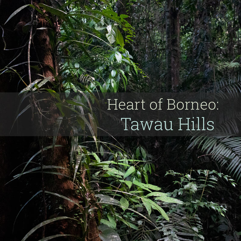 Heart of Borneo - Tawau Hills - Album Cover