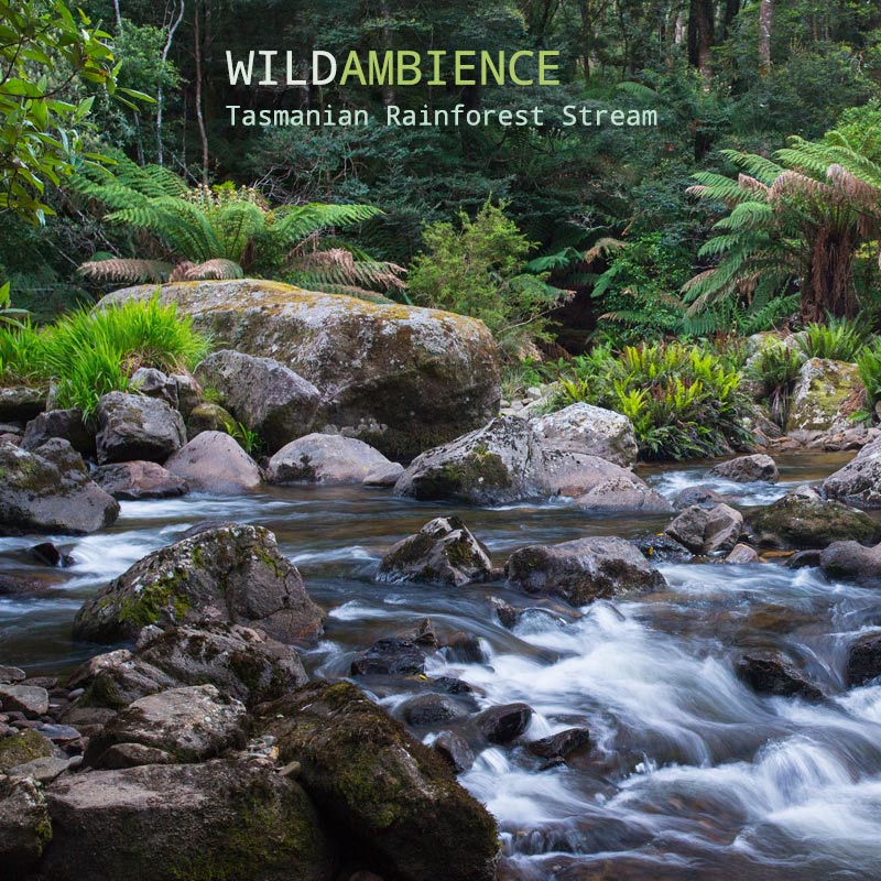 Tasmanian Rainforest Stream - Album Cover
