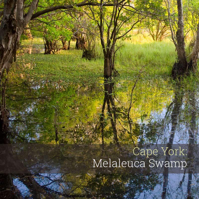 Melaleuca Swamp - Album Cover
