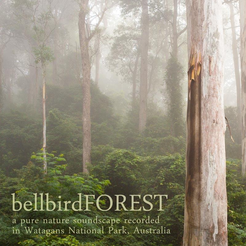 Bellbird Forest - Album Cover