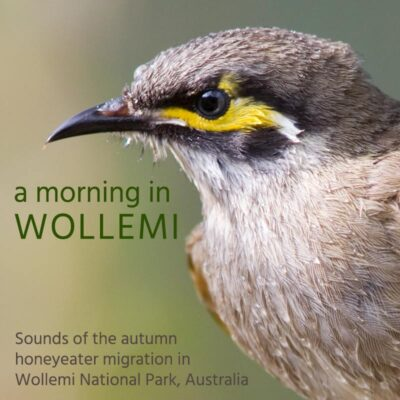 A Morning in Wollemi - Album Cover