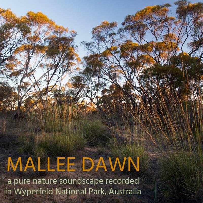 Mallee Dawn - Album Cover