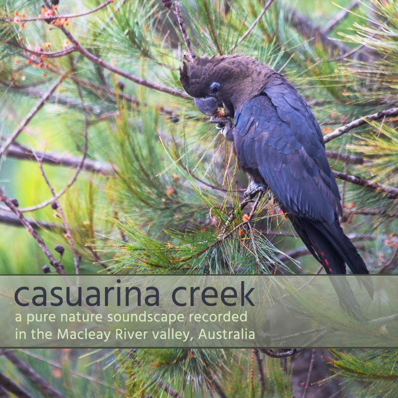 Casuarina Creek - Album Cover