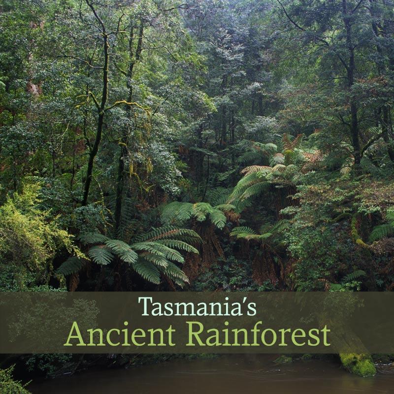 Tasmania's Ancient Rainforest - Album Cover