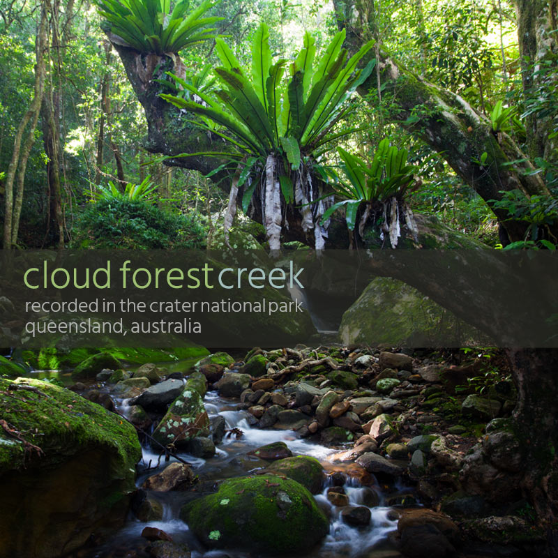 Cloud Forest Creek - Album Cover