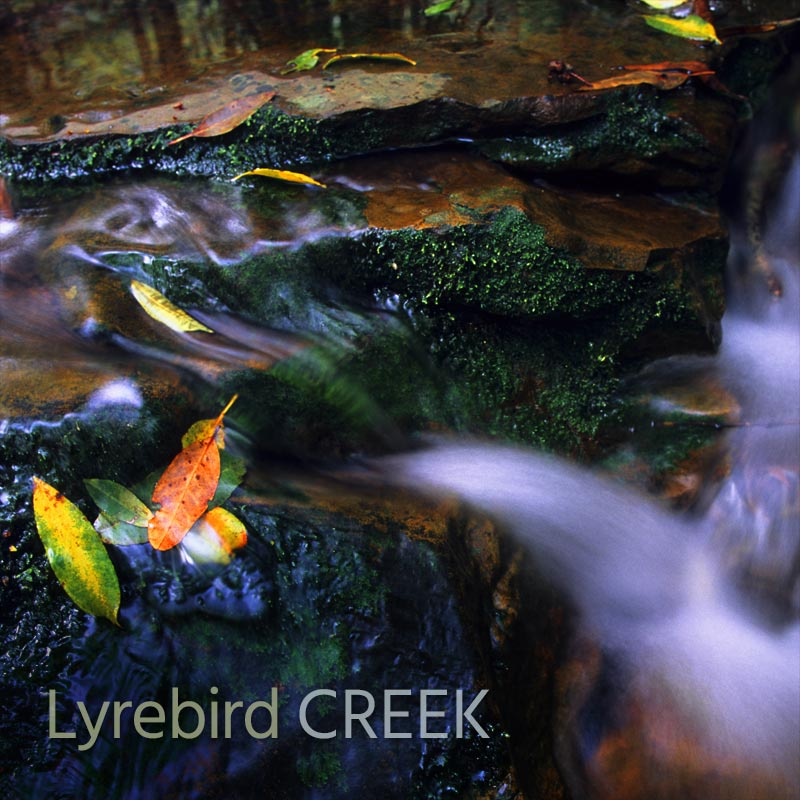Lyrebird Creek - Album Cover