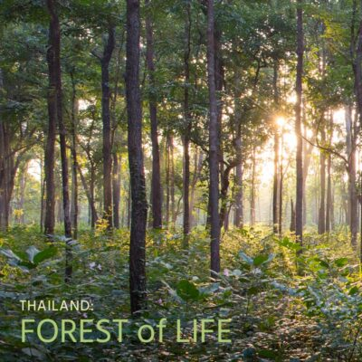 Thailand: Forest of Life - Album Cover