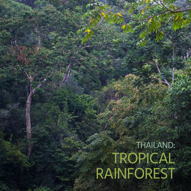 Thailand: Tropical Rainforest - Album Cover