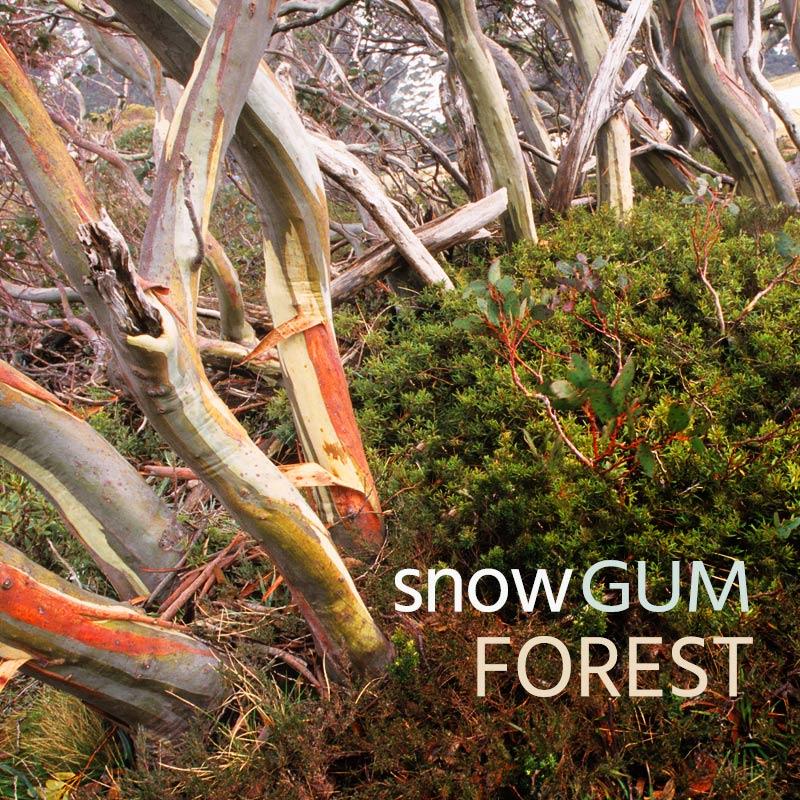 Snow Gum Forest - Album Cover
