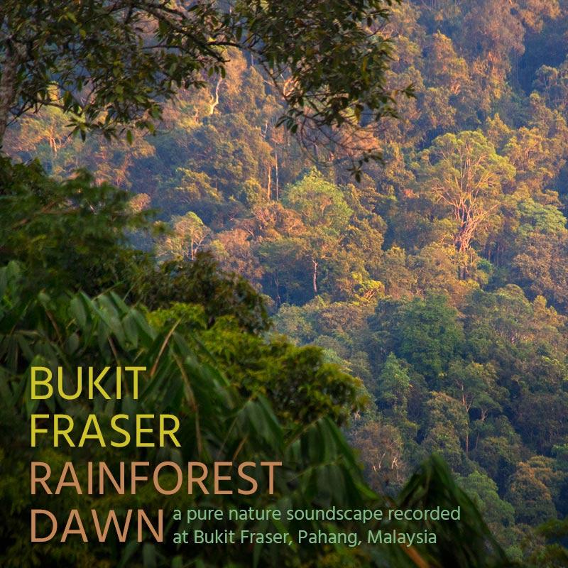 Bukit Fraser: Rainforest Dawn - Album Cover